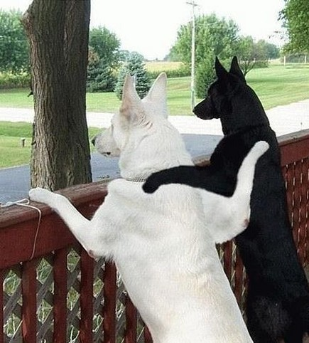 two-dogs-are-best-friends